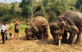elephant care program, elephant care program, elephant sanctuary program, karen people with elephants, the relation of karen people with elephants
