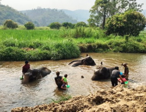 Elephant07 : The Relation of Karen People with Elephants