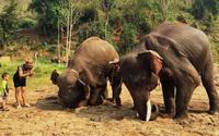 elephant care program, elephant care program, elephant sanctuary program, karen people with elephants, the relation of karen people with elephants