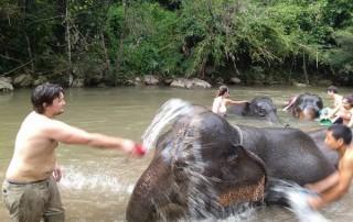 elephant care maewang, hug elephants sanctuary, hug elephants sanctuary mae wang, chiang mai trekking mae wang, chiang mai trekking, trekking in chiang mai