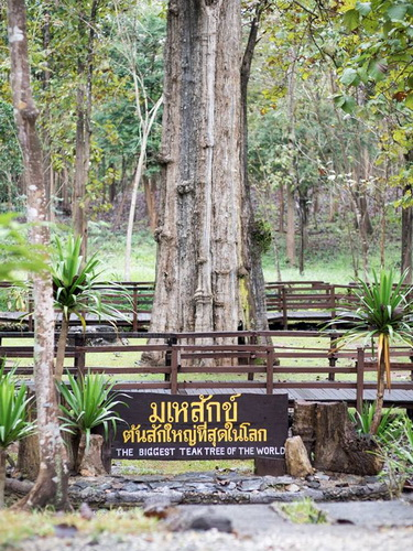 klong tron national park, ton sak yai national park, uttaradit national park, klong tron