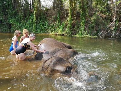 thom's pai elephant camp, thoms pai elephant camp, thom pai elephant camp, pai elephant camp